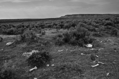 Bone scattered. Oregon Trail east of Prospect Hill.