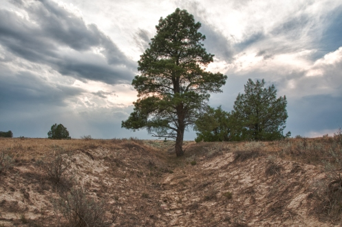 Tree growing in deep swale of the Oregon Trail along private property west of warm springs Wyoming.