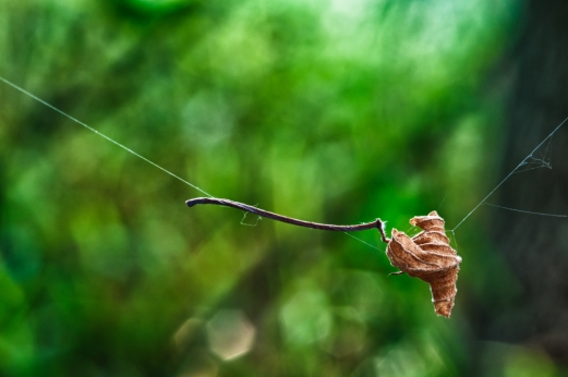 Suspended Leaf, photographed while in camp along the Pony Express trail in Kansas.