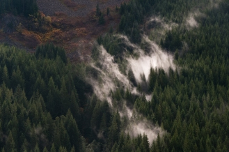 Fog rising from thick forest canopy of Western Oregon along the descent of the Barlow Road section of the Oregon trail, HW 26 west of Laural Hill.