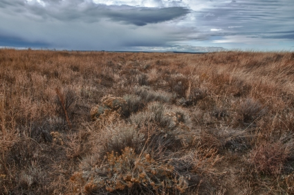 Ruts along the Oregon Trail through Echo Meadows. A demonstration of swales and ruts five miles west of the town of Echo, Oregon.