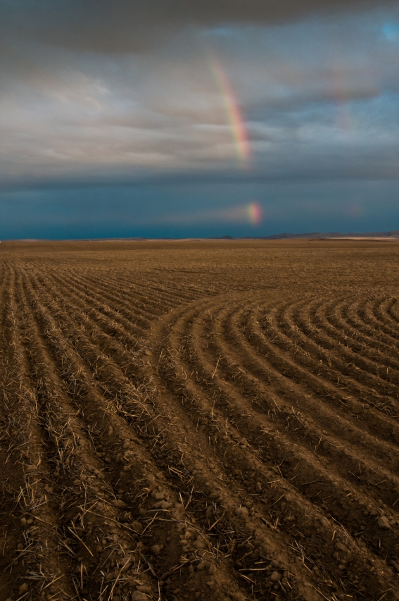 Early evening rainbow over plowed fields along Umatilla River Valley, Oregon