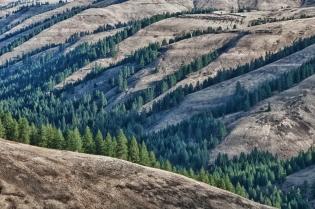 Squaw Creek Drainage, Blue Mountains, Oregon.