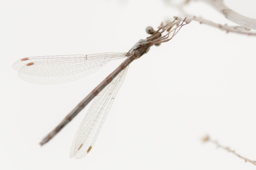 Dragonfly I photographed while resting along the Oregon trail west of Montpelier Idaho.